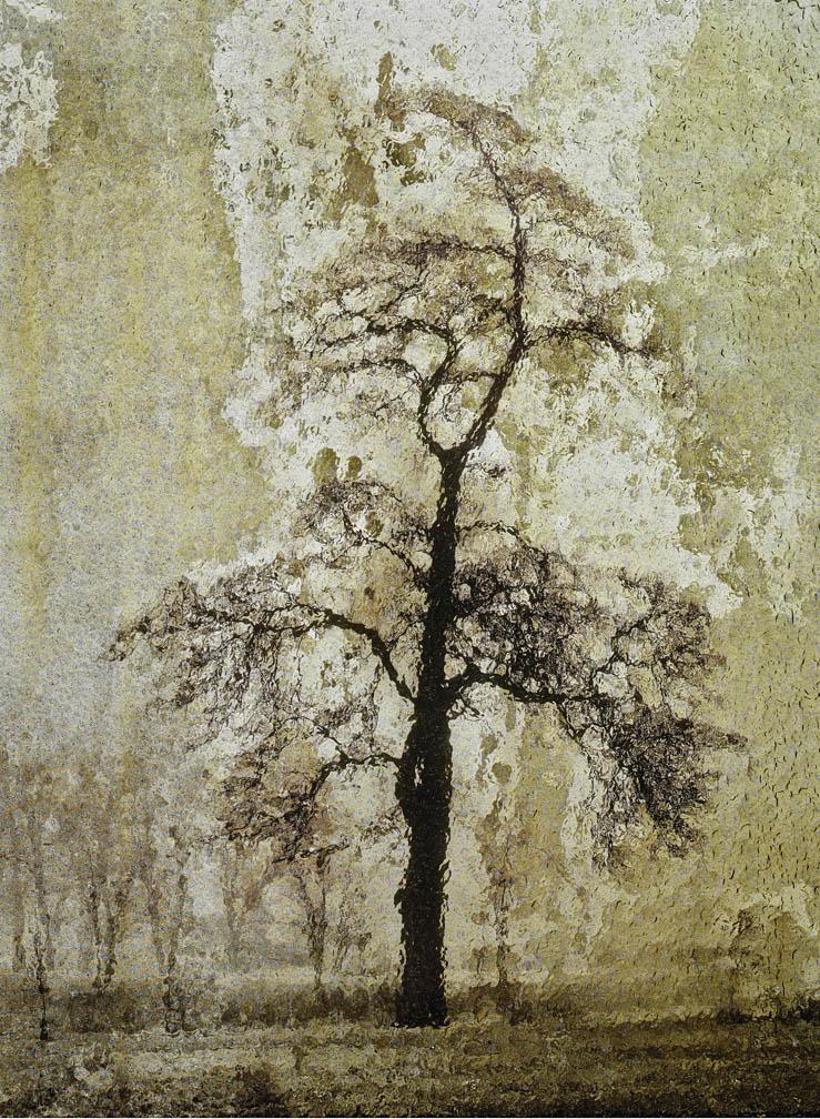 michaeleastman-forestparkforever-33.jpg