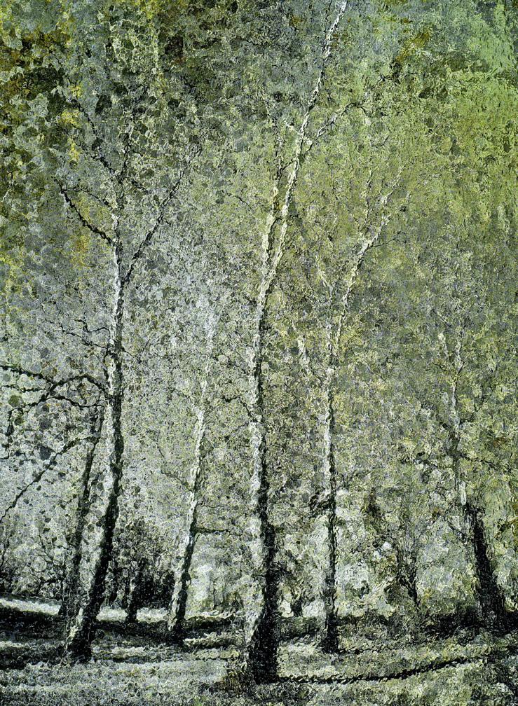 michaeleastman-forestparkforever-32.jpg