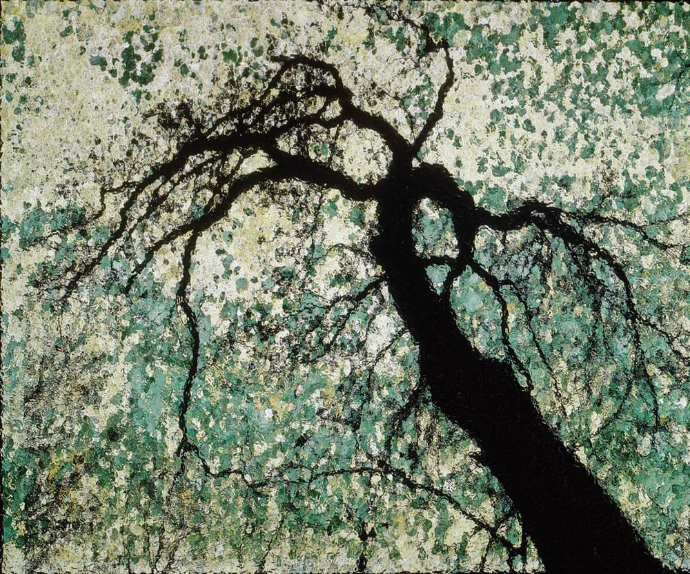 Forest park trees 102.jpg