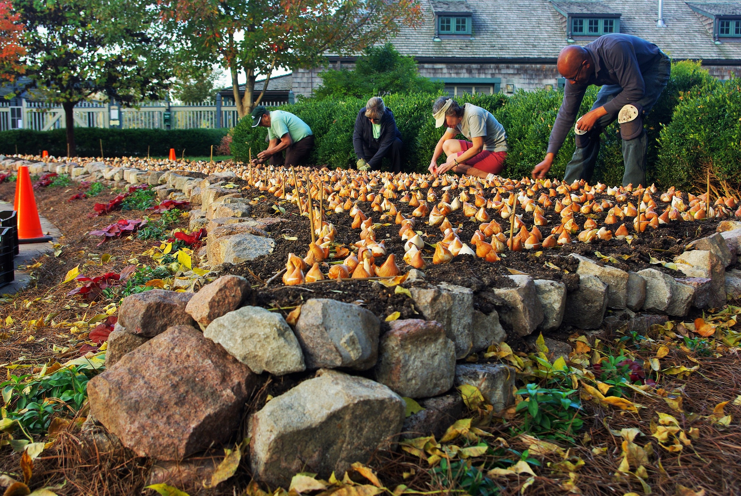 Beauty at the Boathouse: The Art and Science of Annual Plantings in ...