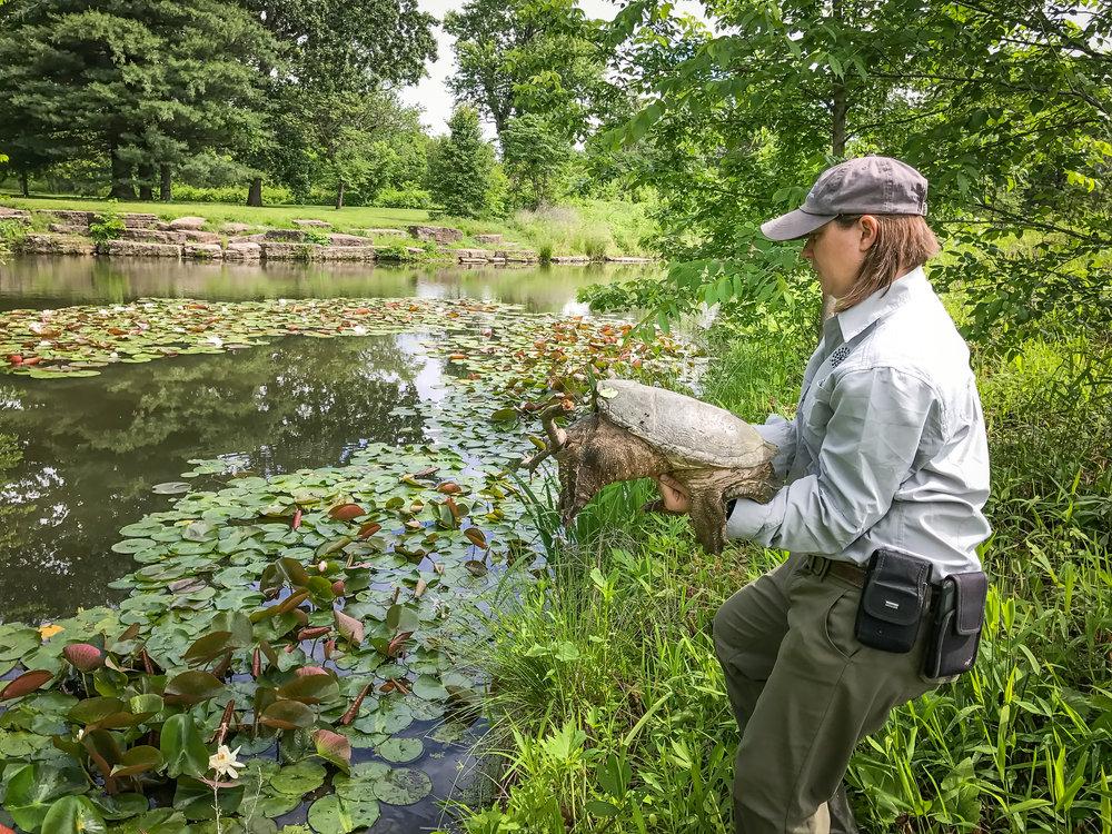 Forest Park Forever Park Ecologist Amy Witt