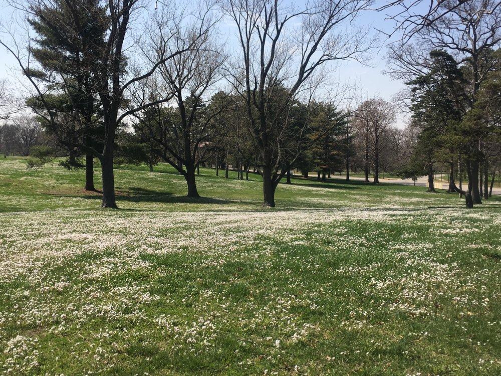Spring Beauties_2315.JPG