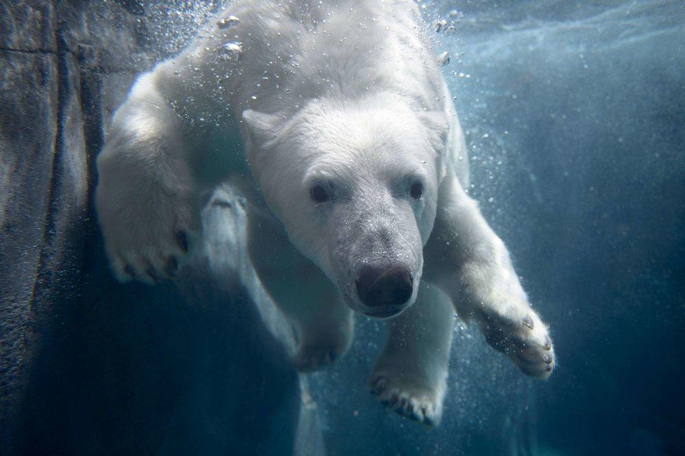 polarbear.jpeg