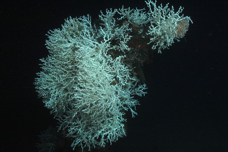Lophelia II 2009: Deepwater Coral Expedition: Reefs, Rigs and Wrecks.