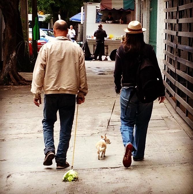 """""""Paseando Ensalada y Chihuahua"""" (2014) — Instagram @juliendevaux"""