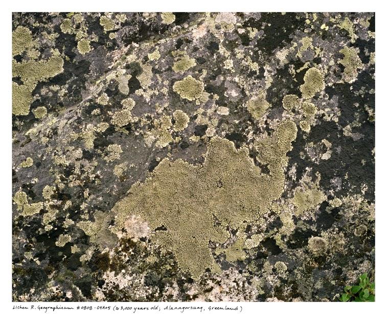 Sussman_lichens_0808_04a05.jpg