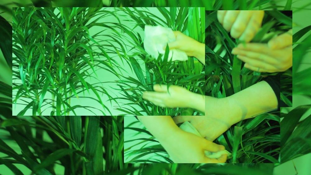 Acosta-Palm-Hands-Collage-3.jpg