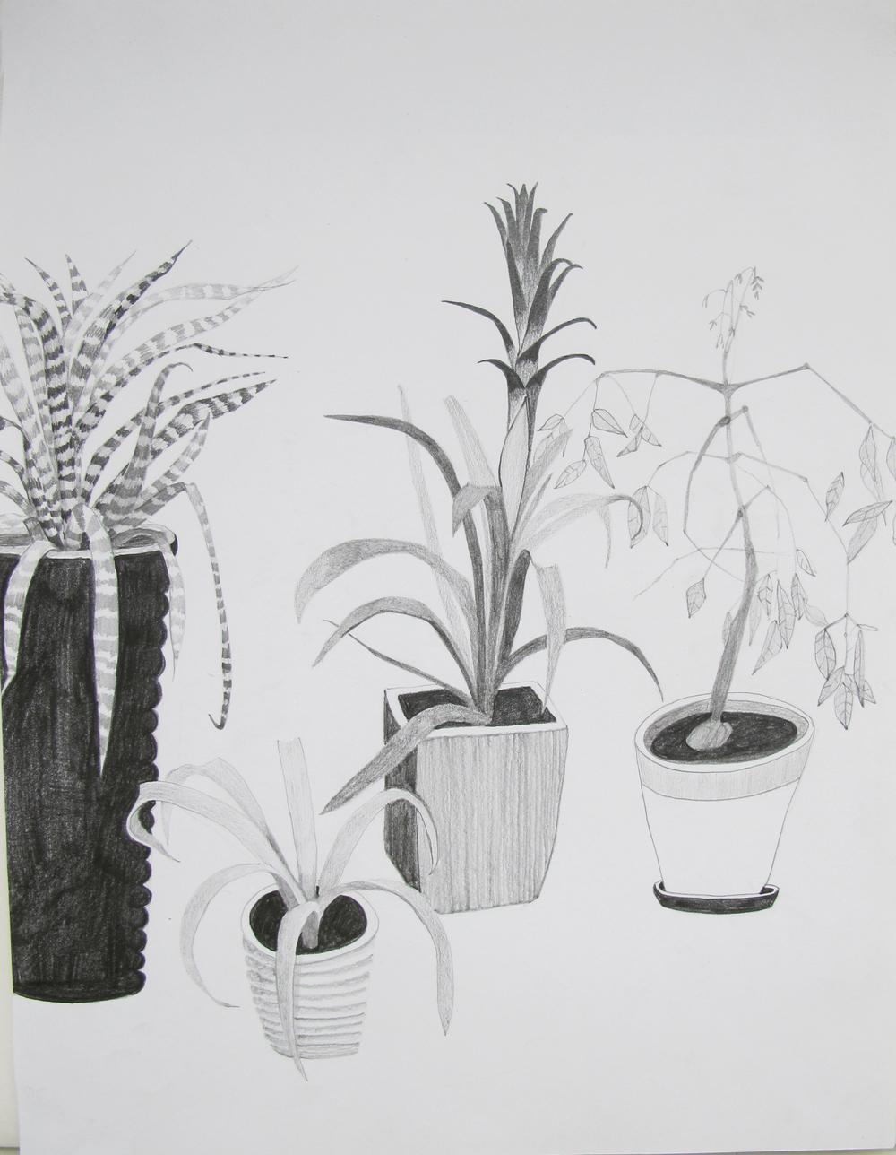 rubys plants.jpg
