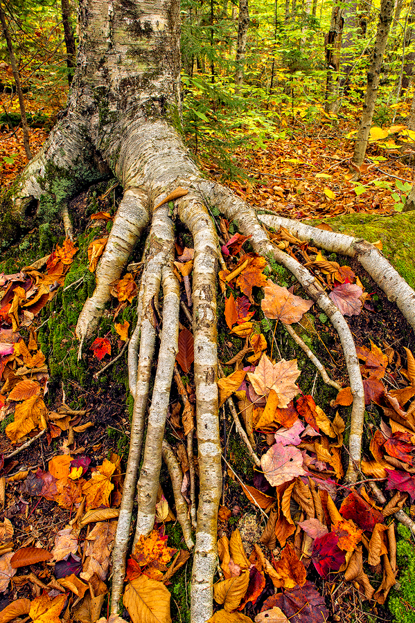 This image caught my eye as it kind of looked like a creepy hand stretching into the leaves.