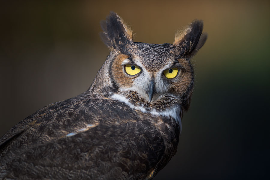 owl_4268-Edit-copy.jpg