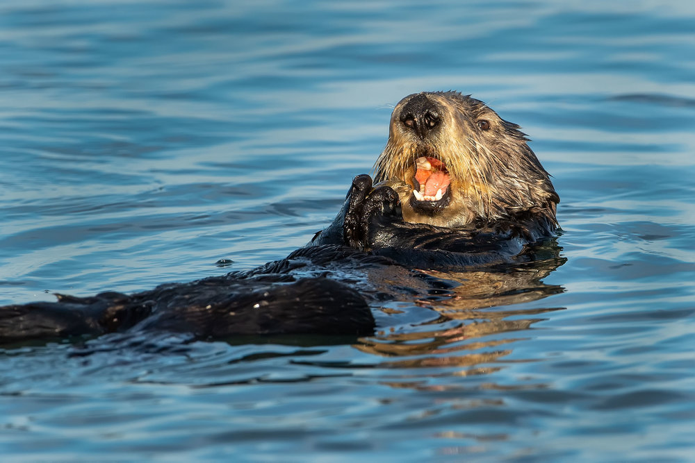 Otter-5S_7111-Edit.jpg