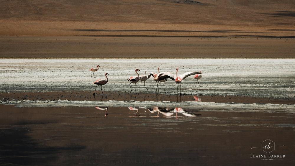 Bolivia149.jpg