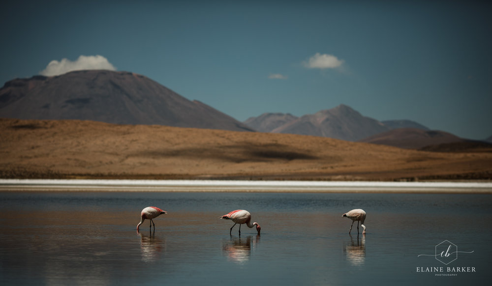 Bolivia162.jpg