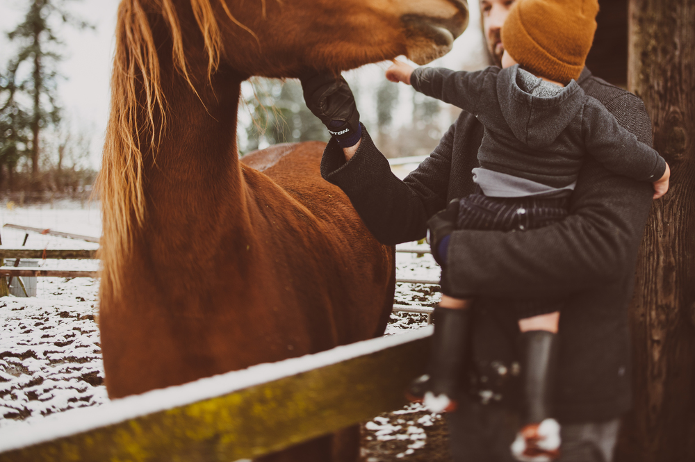 HorsesCaseys-50.jpg