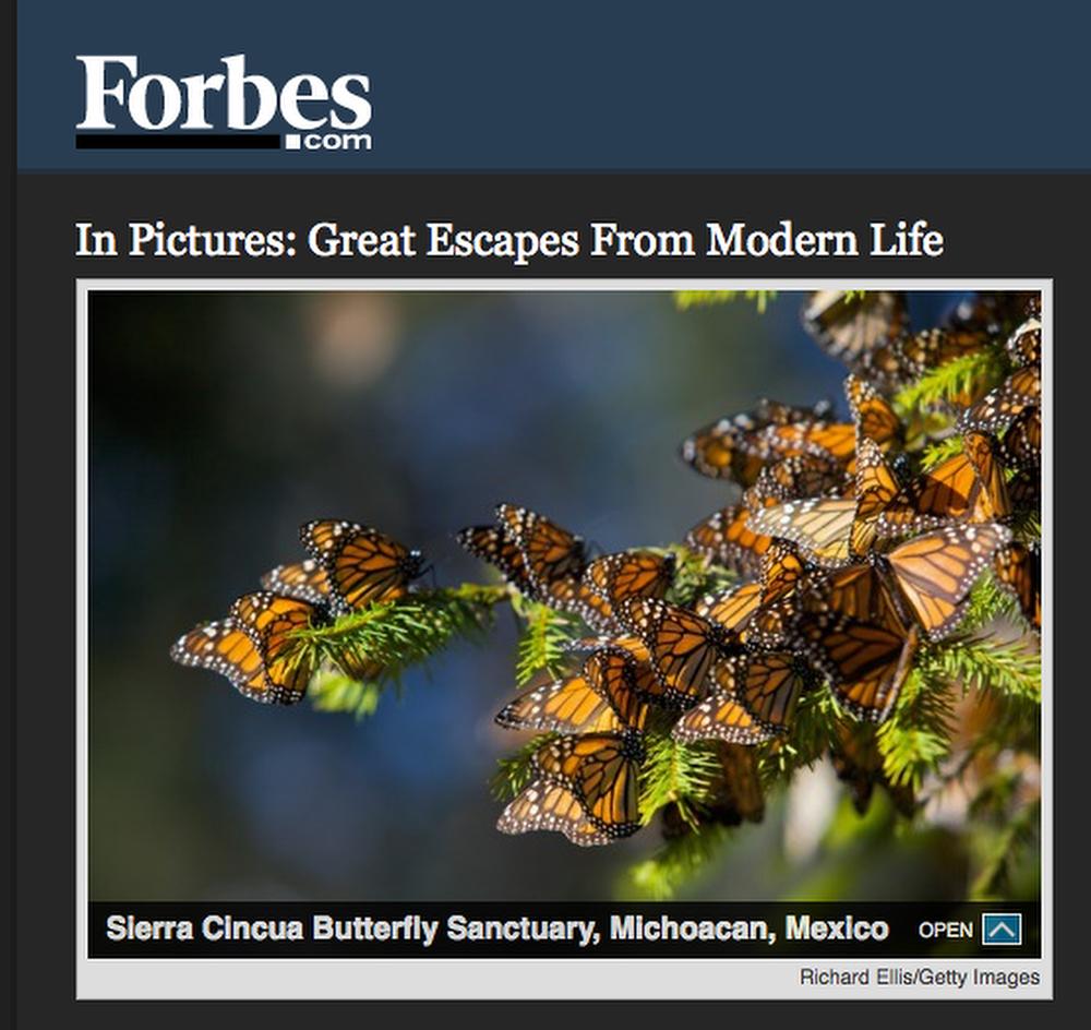 Forbes_butterflies.JPG