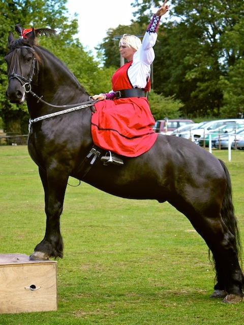 Dante, Friesian Northcote Heavy Horse Centre