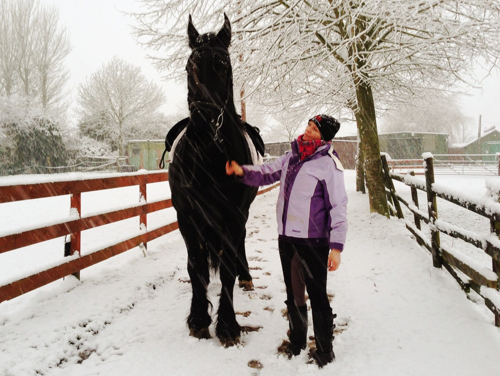 Dante. Friesian Horse in the snow. Winter. Northcote Heavy Horses