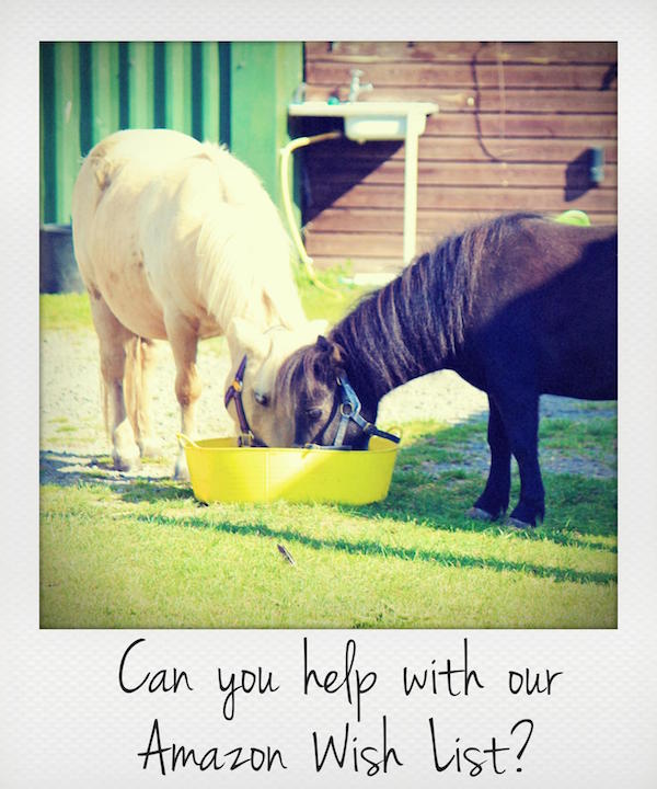 Can you help by buying from our Amazon Wish List?