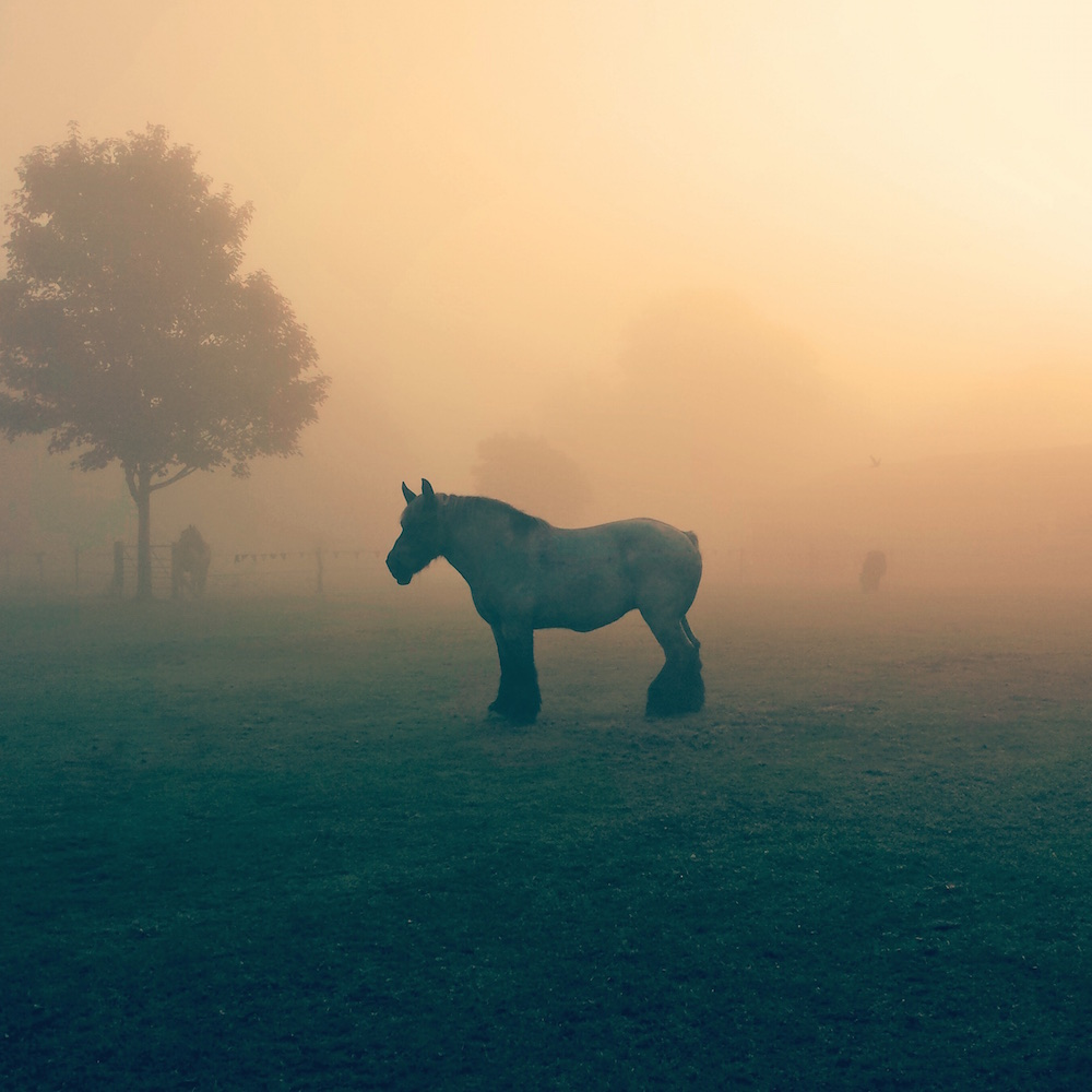 Heavy Horse in the Mist Canvas Print Artwork.jpg