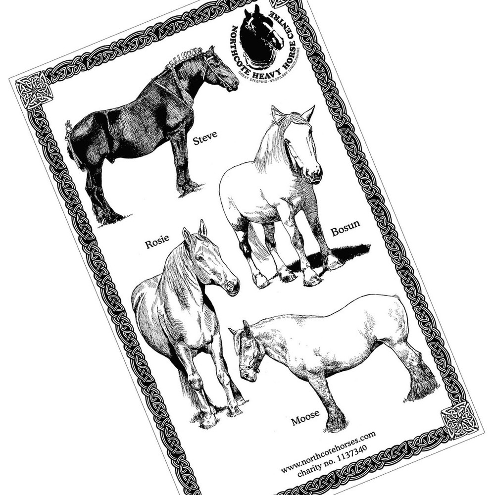 Heavy Horse tea towel. Featuring heavy horse pictures including Boson a british percheron, steve a canadian percheron, moose a belgian trekpaard and rosie a suffolk punch. All living at rescue centre and sanctuary the Northcote Heavy Horse Centre.