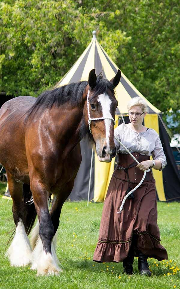 Meet-the-horses.jpg