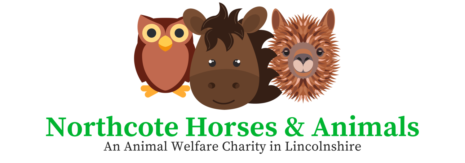 Lincolnshire Animal Welfare Charity | Northcote Heavy Horse Centre