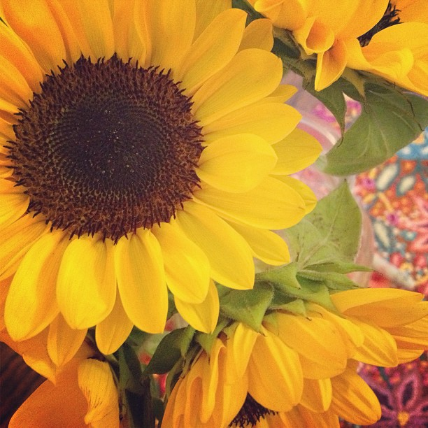 Sunday shopping at its finest. My favorite part of this time of year! 🌻#flowerpower
