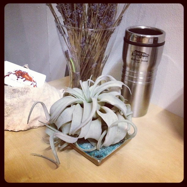 Welcome to the plant family!!  (Taken with  Instagram )