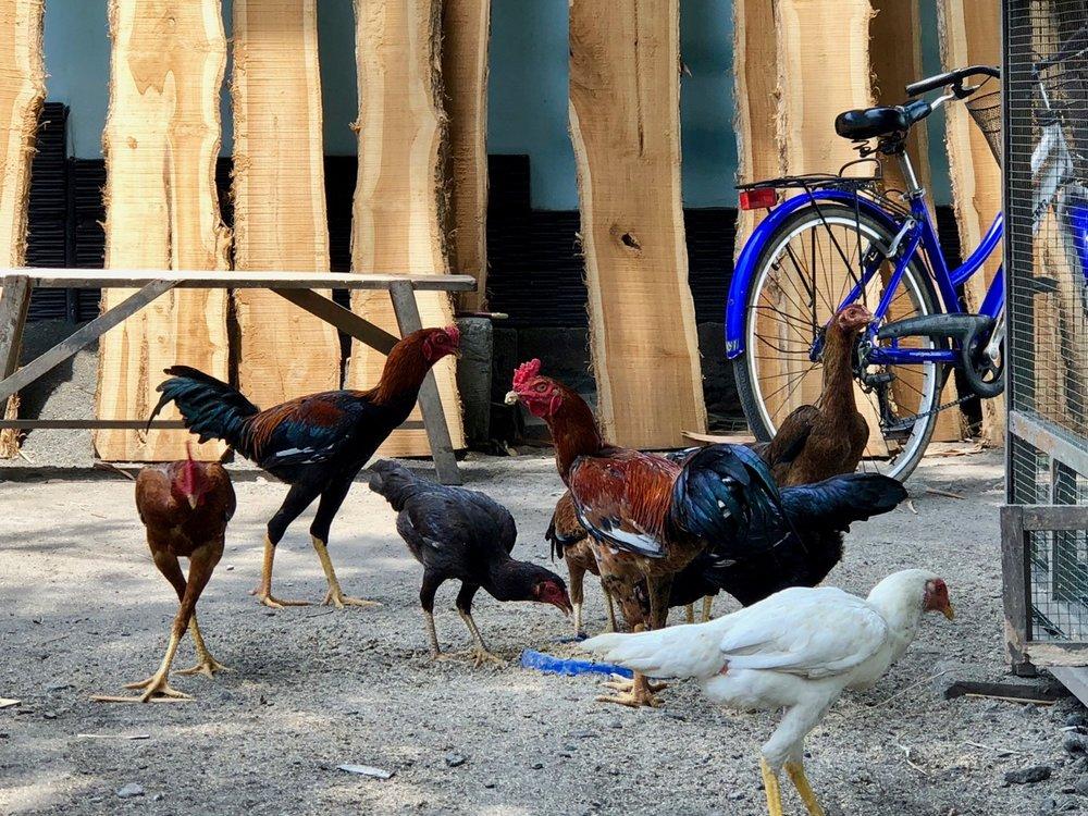 chicken small.jpg