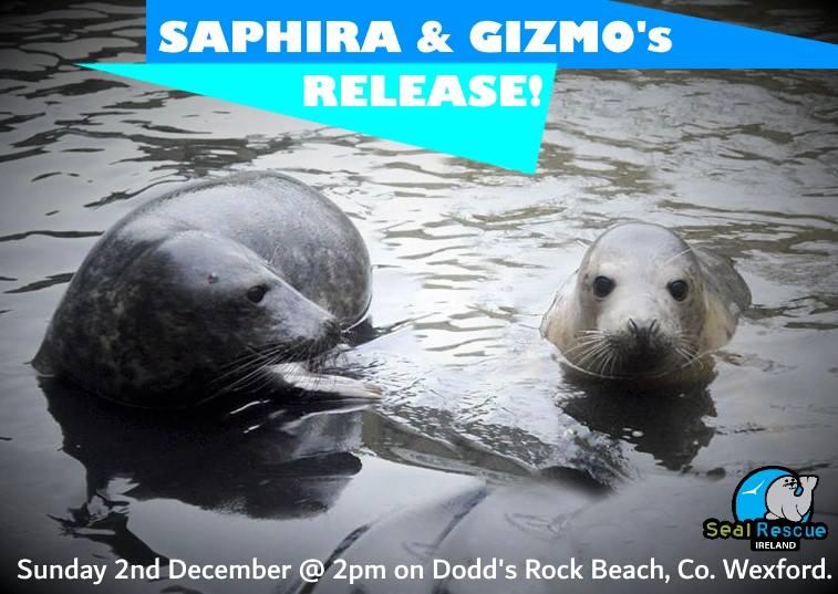 Saph and Gizmo release_n.jpg
