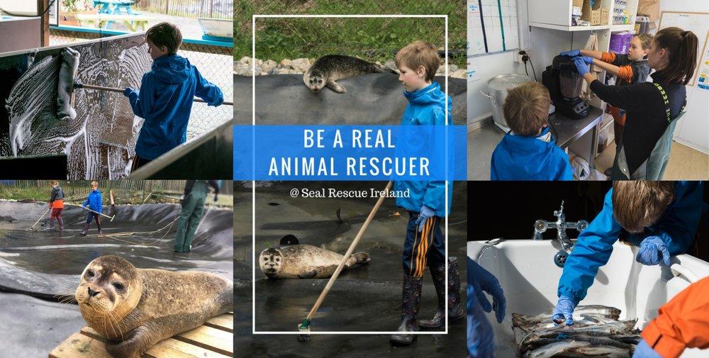 animal rescuer.jpg