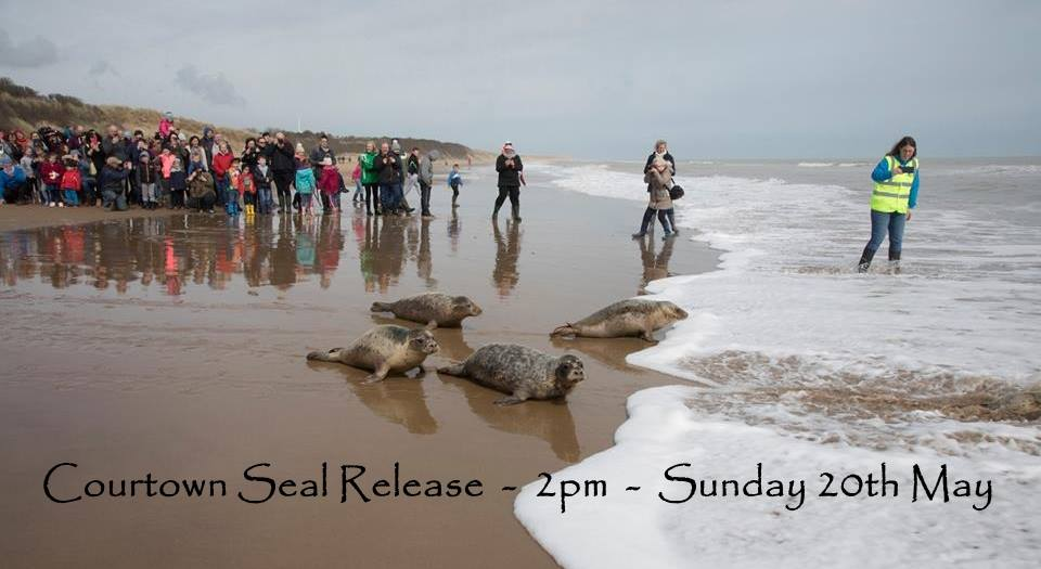 courtown-seal-release.jpg