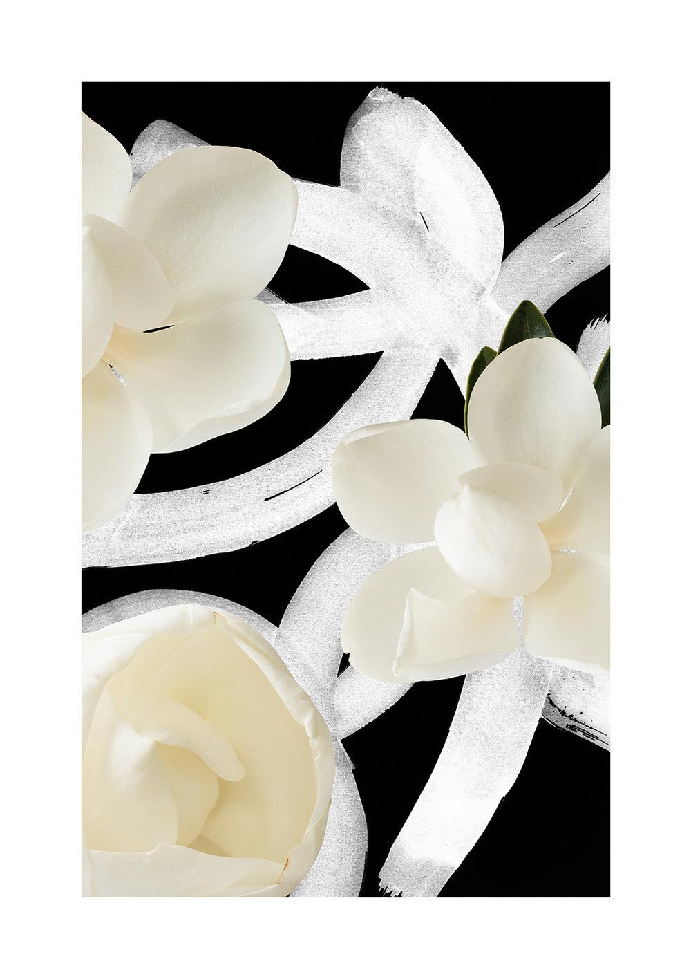 Magnolia Grandiflora Limited Edition Print