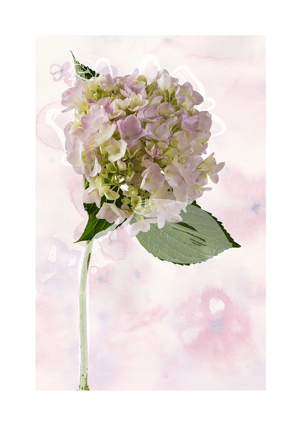 Delicate Bloom Limited Edition Print
