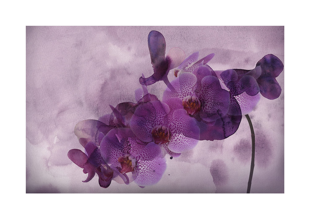 Violet Undertones Limited Edition Print