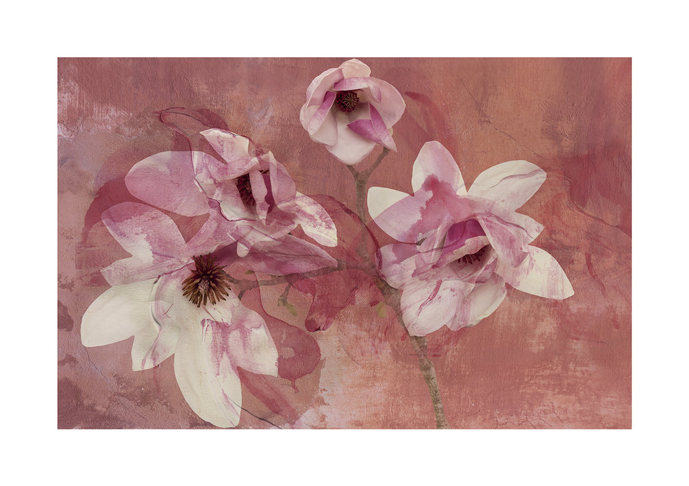 Magnolia Fresco Limited Edition Print