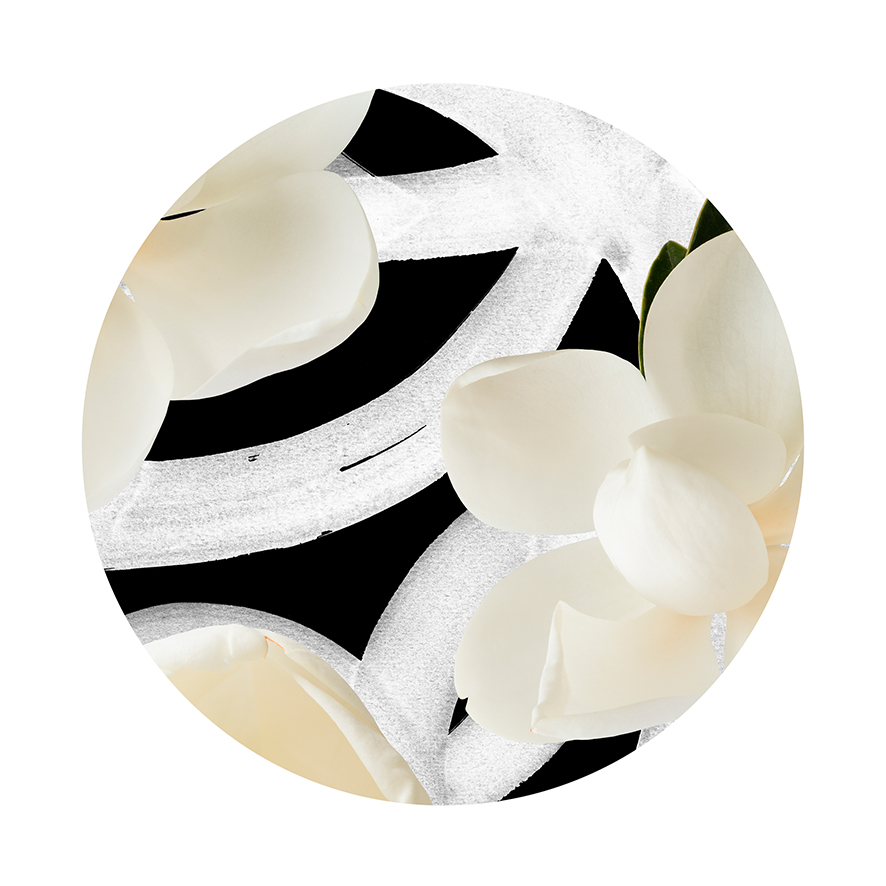 Magnolia Grandiflora - Circle Detail - Limited Edition Print