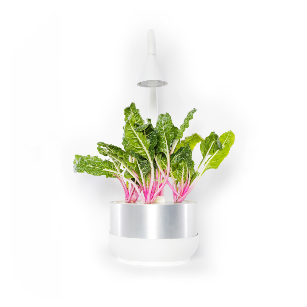 CFP Peppermint Chard (Clean).png