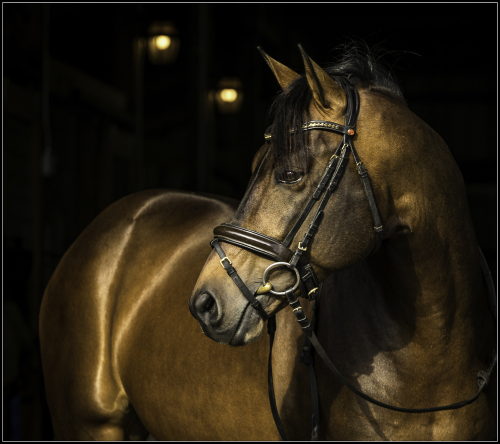 Dressage Photographer Florida