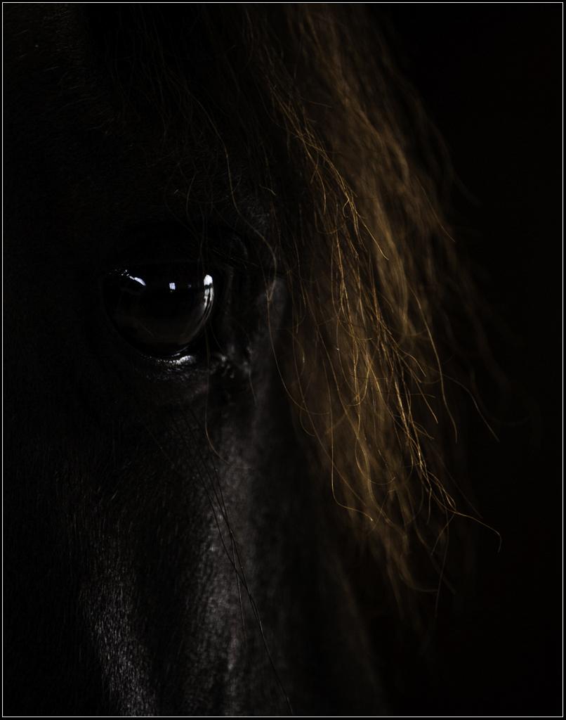 Fine Art Horse Portraits