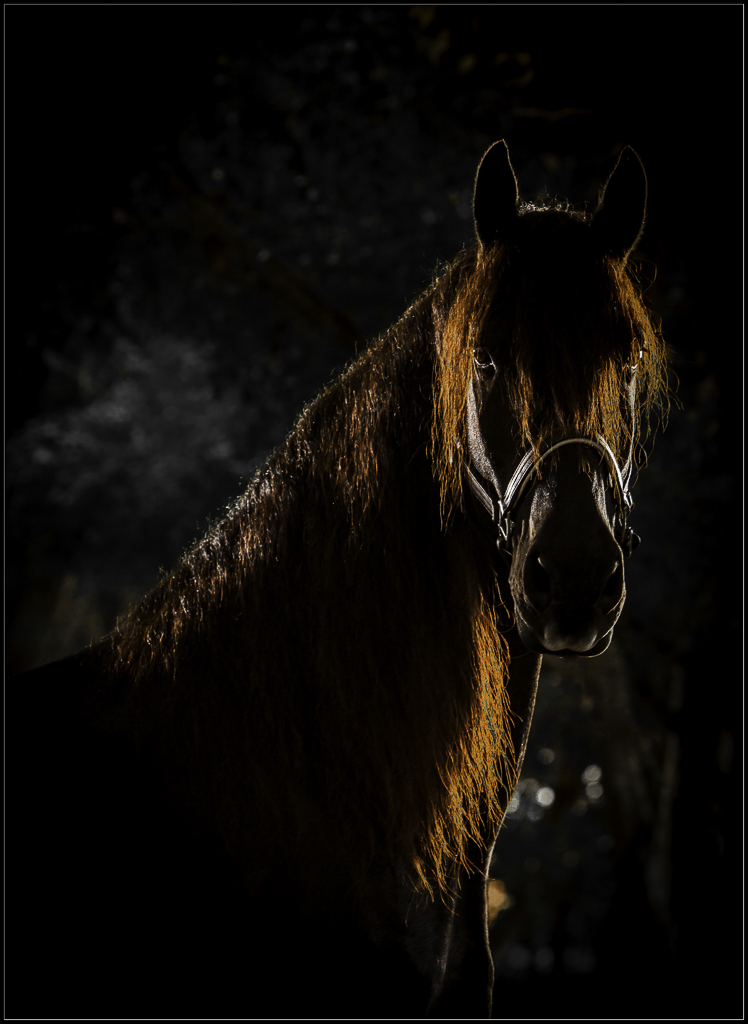 Equine Photography Wellington