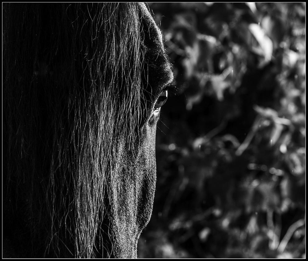 Equine Photography Boca Raton