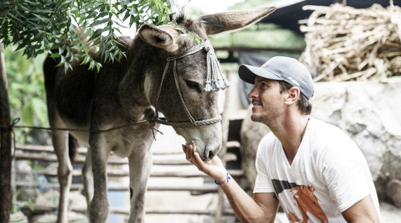 nic-roldan-donkey.jpg