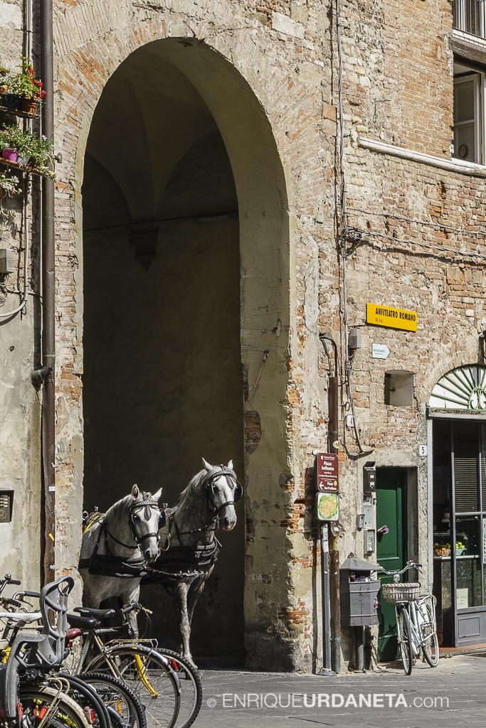 Lucca_Italy_by-Enrique-Urdaneta-20170616-6.jpg