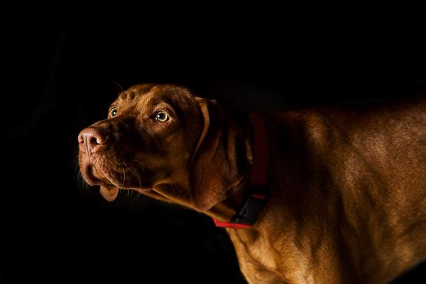 Dog Photographer Enrique Urdaneta