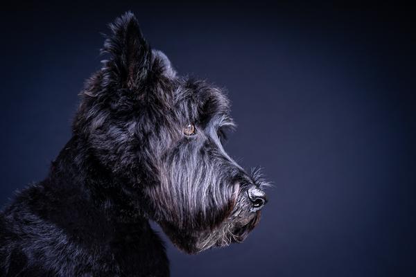Dog Photography Enrique Urdaneta