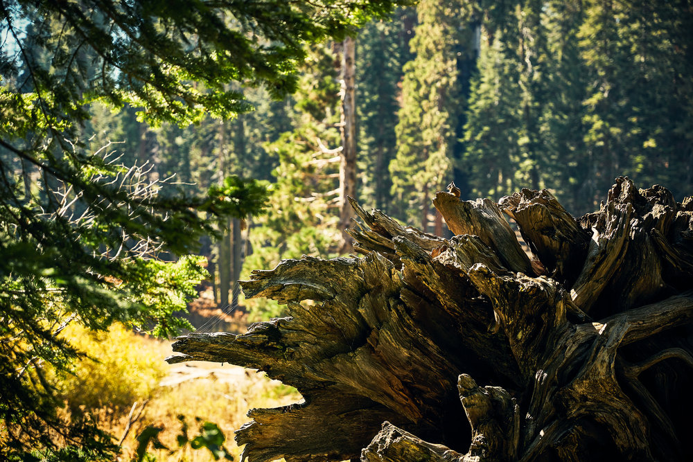 KINGS_CANYON_SEQUOIA_2018_0426_v1.jpg