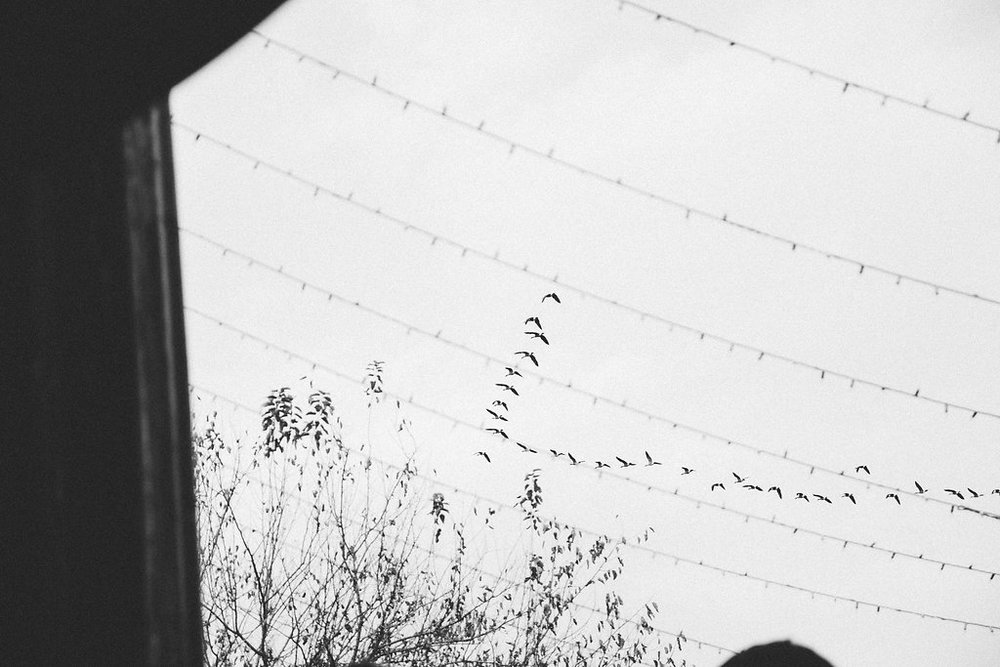 birds fly over wedding photo