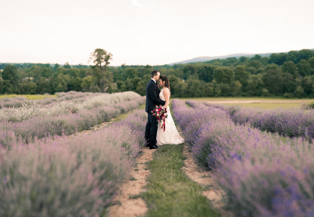 Groom kissing bride's forehead in lavender field