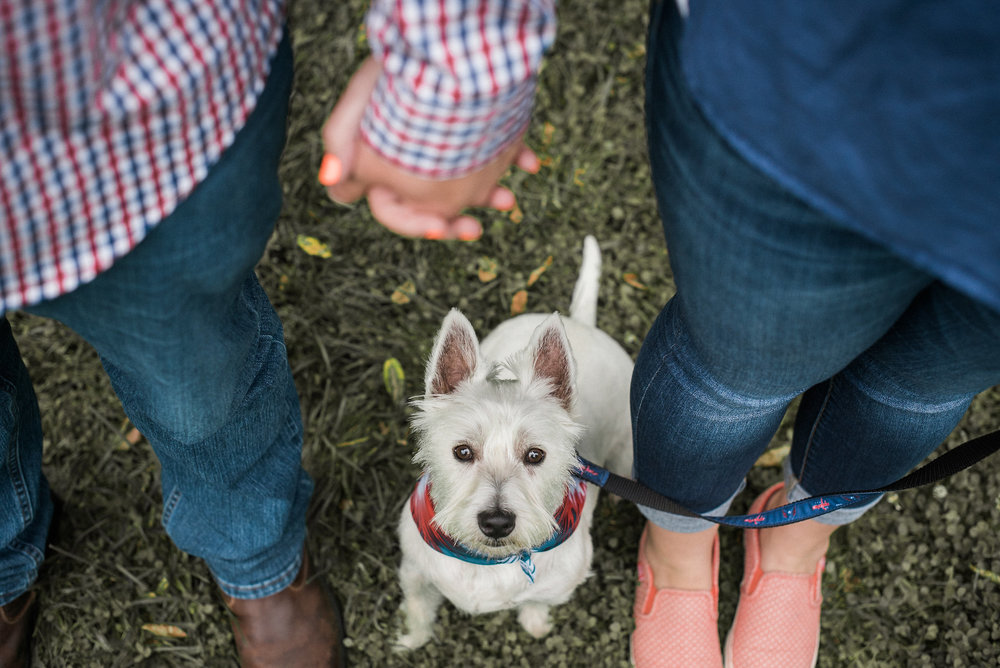 Dog standing under couple holding hands